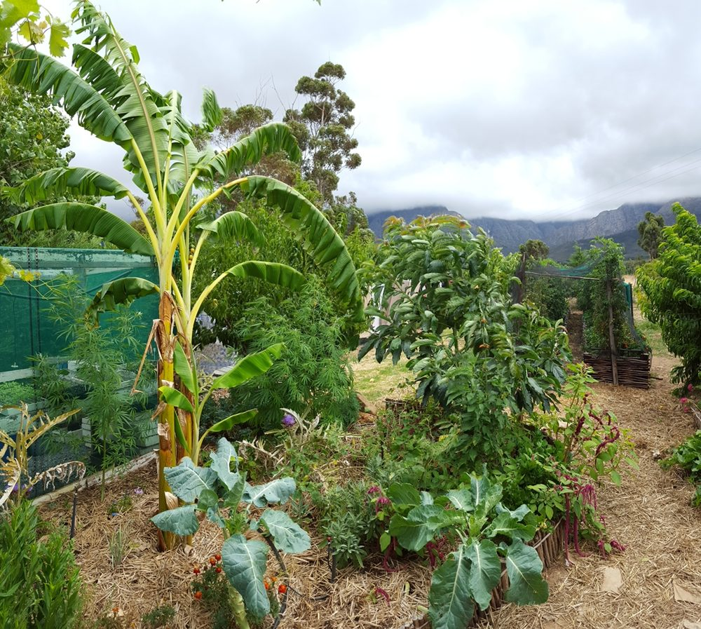 What is permaculture permaculture design for Permaculture garden designs